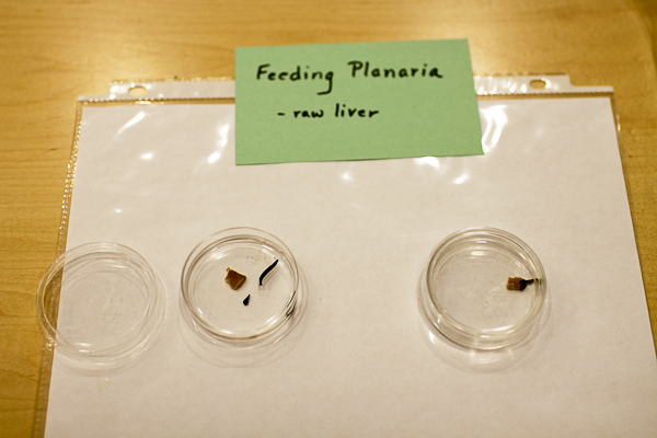 Plenty of Planaria